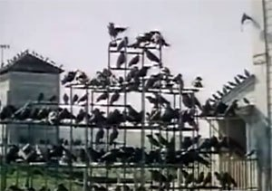 The Birds filmruta